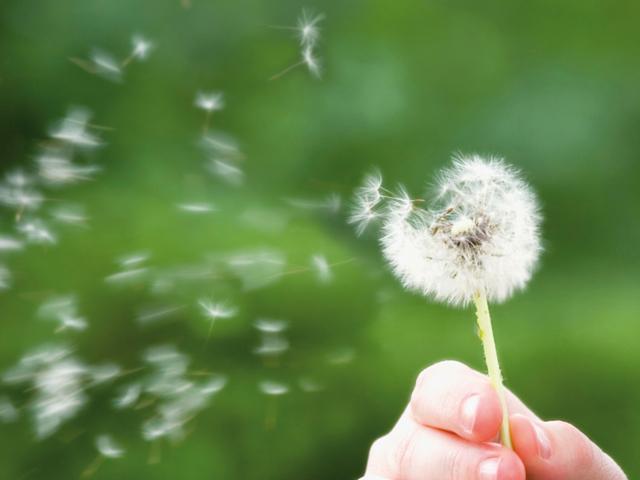 Allergien: Was ist das und wie erkenne ich sie? | Praxis Schleicher & Brückl