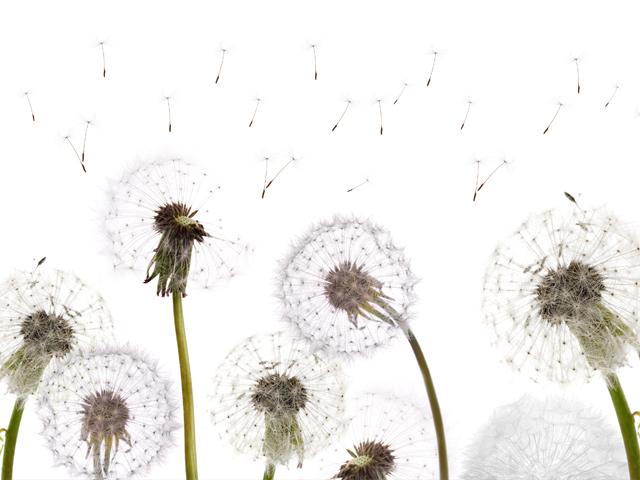 Allergien: Wie sie sich zu erkennen geben | Praxis Schleicher & Brückl